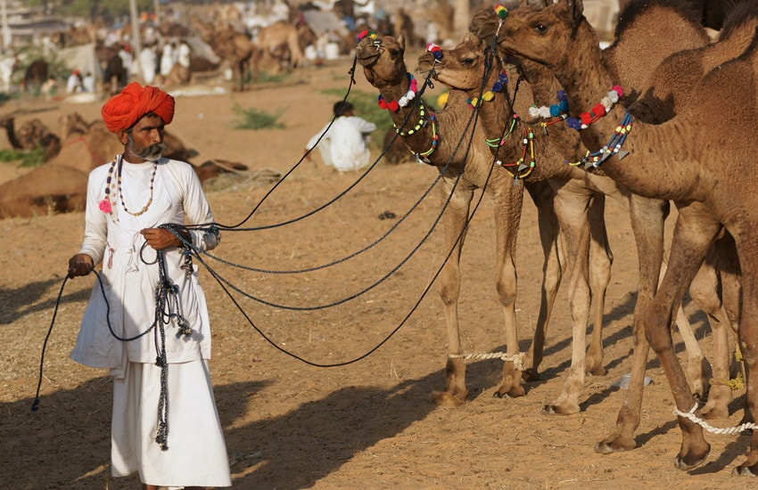 Pushkar Fair