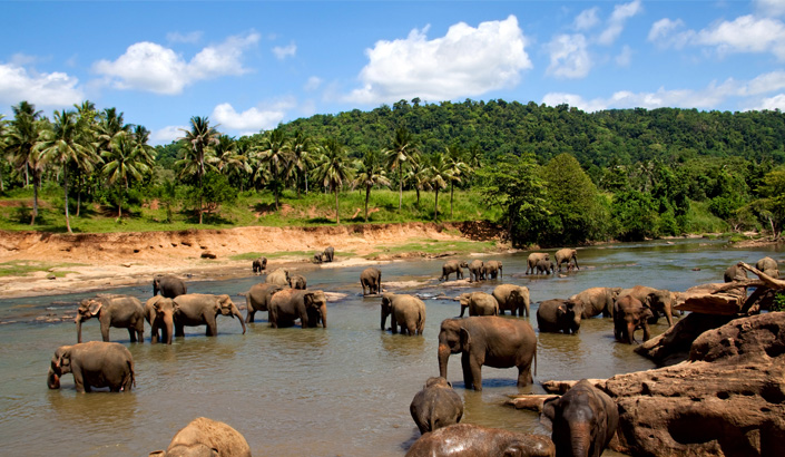 Discover Asia – Safari and wildlife tours